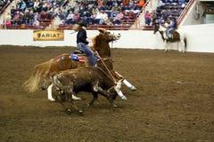 Roping de Bull Imagem de Stock