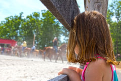 Roping de observação do cavalo imagem de stock