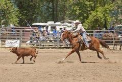 Roping de veau Photographie stock libre de droits