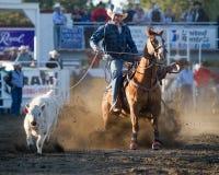 Roping del manzo - sorelle, pro rodeo 2011 dell'Oregon PRCA fotografie stock