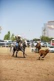Roping del vitello Fotografia Stock Libera da Diritti