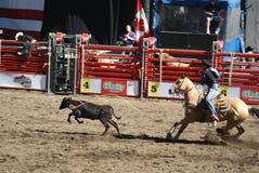 Roping di Tie-Down del cowboy Fotografie Stock Libere da Diritti