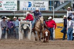 Roping do boi - irmãs de PRCA, rodeio 2011 de Oregon Foto de Stock