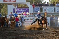Roping do boi - irmãs, pro rodeio 2011 de Oregon PRCA Foto de Stock