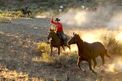 Roping at Dusk. Two Cowboys galloping and roping through the desert Royalty Free Stock Images