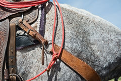 Roping event horse details. Details, horse ready for a roping event Royalty Free Stock Photos