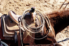 Roping Horse. Rodeo horse with saddle and ropes Stock Photos