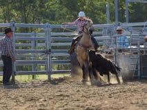 Roping Kalb des Cowgirls stockfotografie