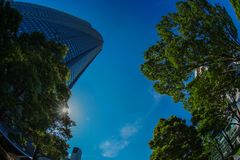 Roppongi Hills and the fresh green. Shooting location :Tokyo 23 wards royalty free stock photo