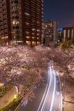 Roppongi Sakurazaka, Tokio Japonia, Marzec, - 26, 2018: Wiśnia kwitnie przy Roppongi Sakurazaka, Tokio, Japonia zdjęcie stock