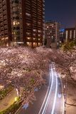Roppongi Sakurazaka, Tokyo, Japan - March 26, 2018: Cherry blossoming at Roppongi Sakurazaka, Tokyo, Japan. stock photo