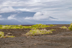 Ropy pahoehoe lava field with shield volcano on Fernandina Stock Images