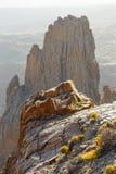 Roques De García, parque nacional de Teide, Tenerife Fotos de Stock Royalty Free
