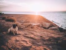 Roquet dans le coucher du soleil Image libre de droits