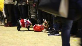 Roquets mignons démontrant l'habillement canin de fête à l'exposition canine, animaux fatigués banque de vidéos