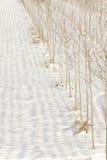 Ror av trees i snowen Royaltyfri Foto