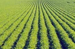 Ror på grön växt Arkivfoto