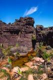 Roraima Tepui上面 免版税图库摄影