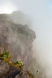 Roraima Tepui山顶, Gran Sabana,委内瑞拉 库存图片