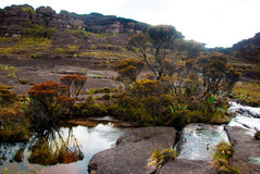 Roraima Tepui山顶, Gran Sabana,委内瑞拉 图库摄影