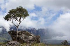 Roraima Tepui或桌山在Canaima,委内瑞拉 免版税图库摄影