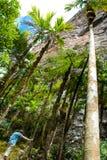 Roraima Tepui, Gran Sabana, Venezuela Immagine Stock Libera da Diritti