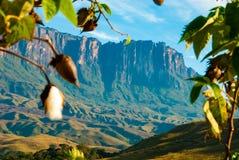 Roraima Tepui, Gran Sabana, Venezuela. Roraima table mountain with cotton tree in first plan, Canaima National Park of Venezuela royalty free stock photography