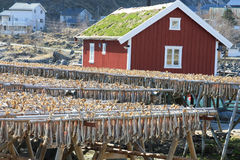 Rorbu with grass on the roof    and stockfish Royalty Free Stock Photography