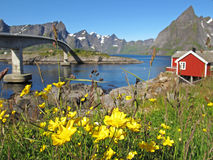 Rorbu hut on Lofoten Royalty Free Stock Photography