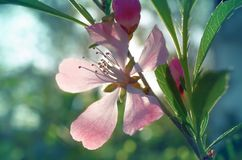 Rosâtre Image stock