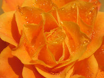 Rosée Photographie stock