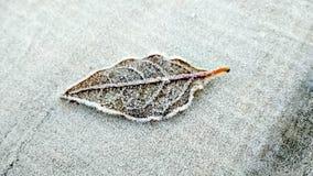 Rosée congelée sur la feuille photo libre de droits
