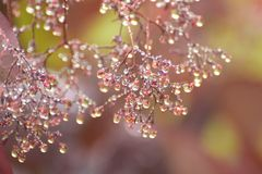 Rosée d'automne Image stock