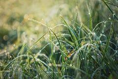 Rosée d'herbe photos stock