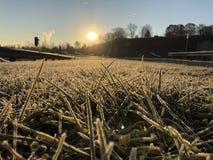 Rosée de lever de soleil de matin photographie stock libre de droits