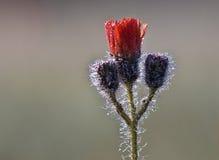 Rosée de matin Photographie stock libre de droits