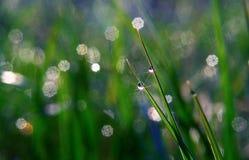 Rosée de matin Image libre de droits