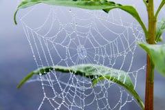 Rosée de matin dans la toile d'araignée Image stock