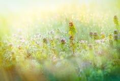 Rosée de matin dans le pré - au printemps images libres de droits