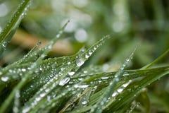 Rosée de matin sur l'herbe Photographie stock libre de droits
