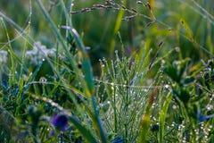Rosée de matin sur l'herbe, avec des fils de Web Images stock