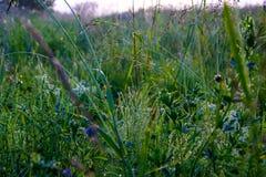 Rosée de matin sur l'herbe, avec des fils de Web Photo stock