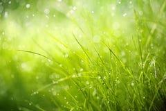 Rosée de matin sur l'herbe de ressort image stock