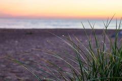 Rosée de matin sur l'herbe dunaire photos stock