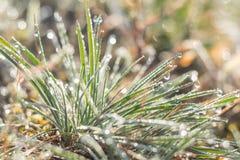 Rosée de matin sur l'herbe verte Photos stock