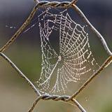 Rosée de matin sur la toile d'araignée Images stock