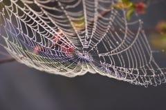 Rosée de matin sur le spiderweb Photos libres de droits