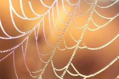 Rosée de matin sur un Web Photographie stock