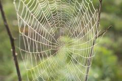 Rosée de matin sur une toile d'araignée Image stock