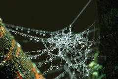 Rosée de toile d'araignée Image stock